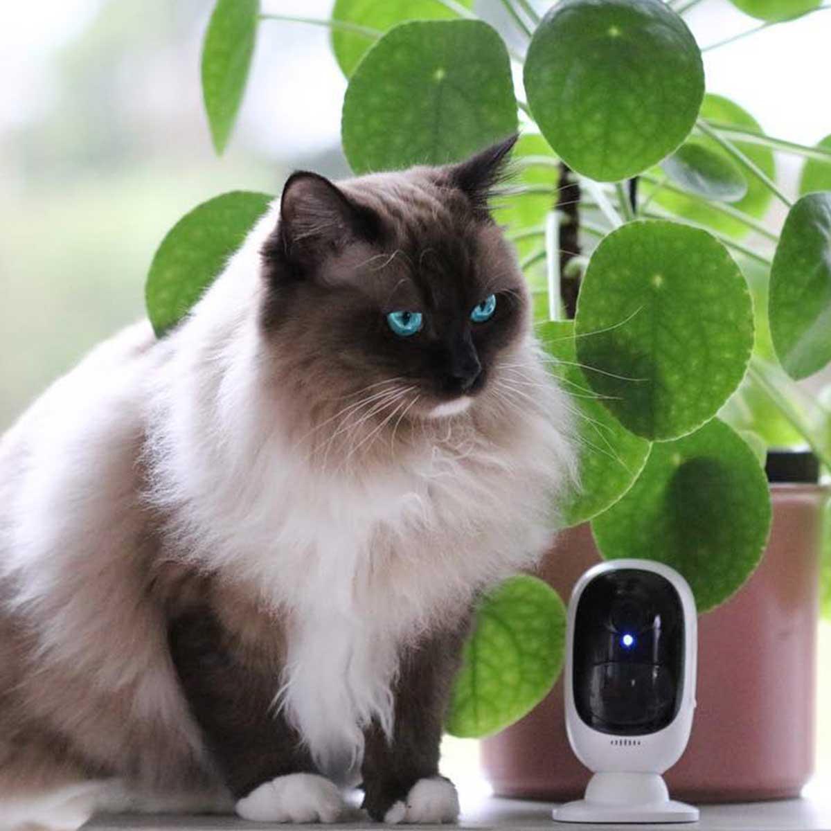 Kamere za kućne ljubimce mačka