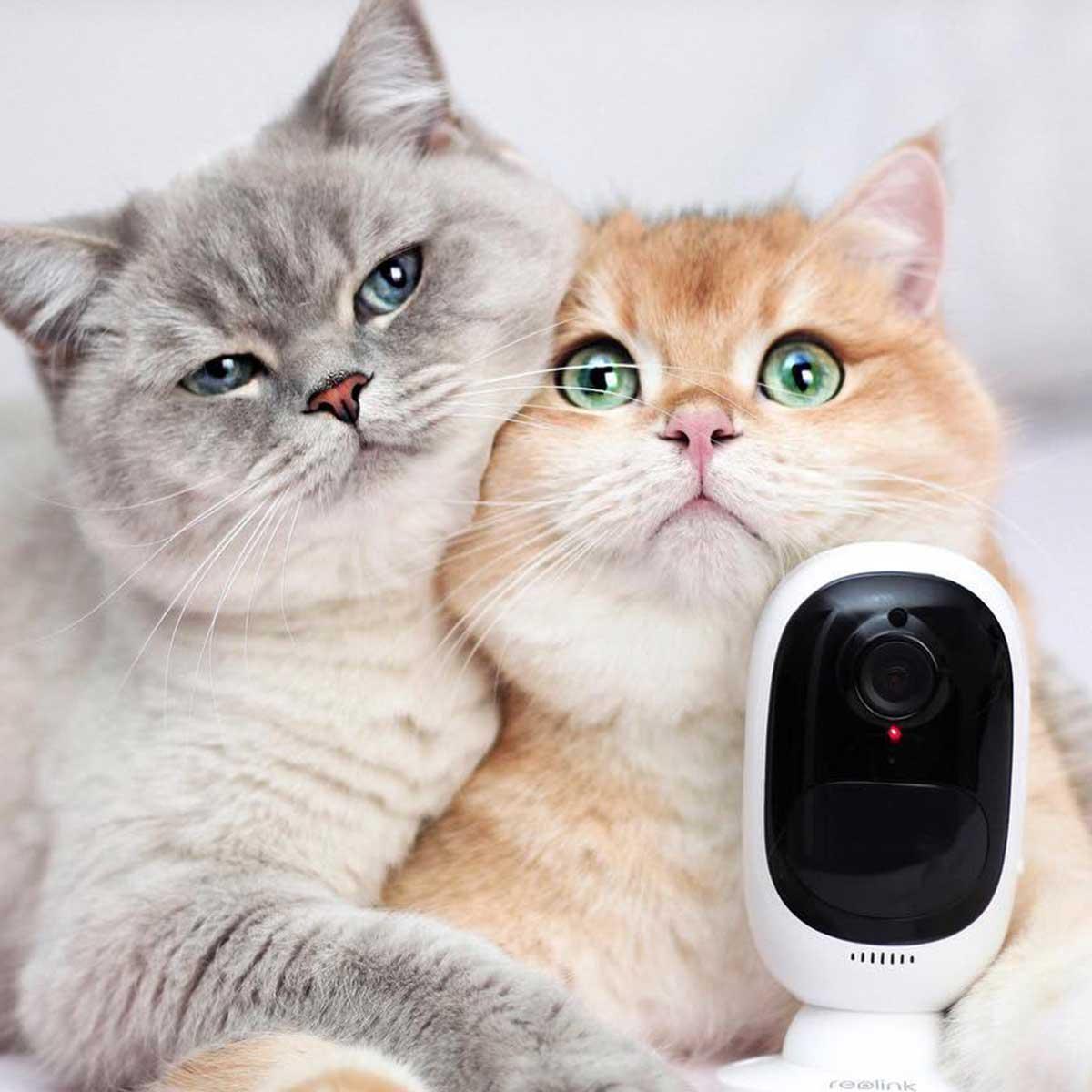 Kamere za kućne ljubimce mačke