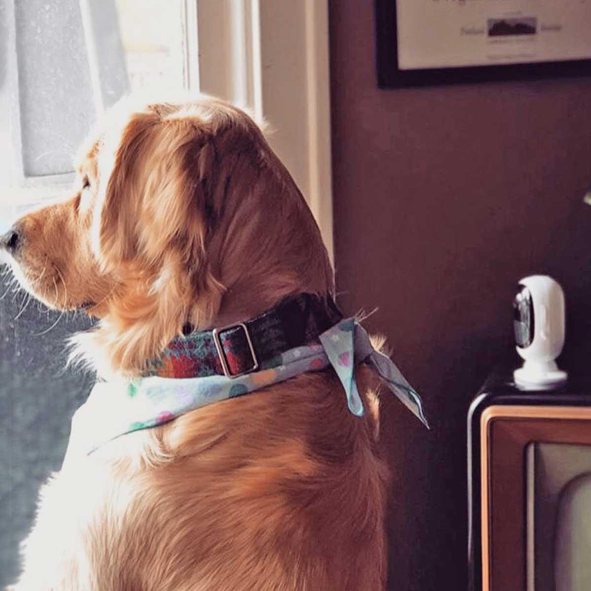 Kamere za kućne ljubimce pas