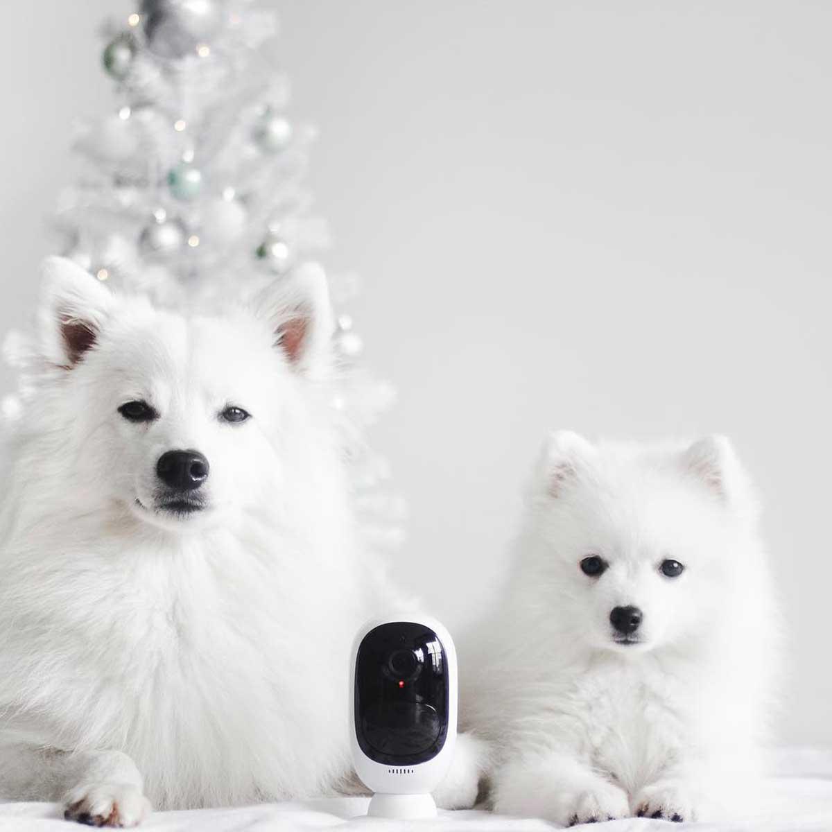 Kamere za kućne ljubimce psi